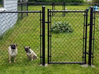 Beverly Dog Fence